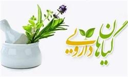 داروی گیاهی لیورسیل درمان دیابت گیاهان دارویی طب سنتی